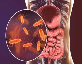 Bacterias intestinales y sistema inmune