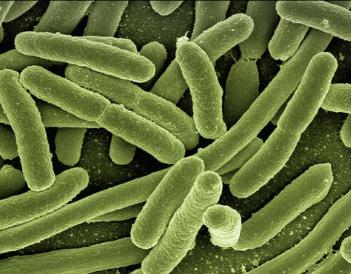 LA MICROBIOTA INTESTINAL Y SU IMPORTANCIA PARA EL SISTEMA INMUNE
